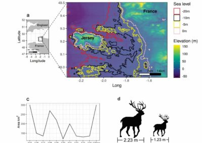 Diniz-Filho et al. (J Biogeogr 2021) Quantitative genetics of an extreme insular dwarfing