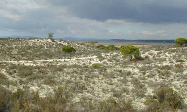 COMDUNES – Do inland sand dune communities follow strict ecological sucession? (2014-2015)