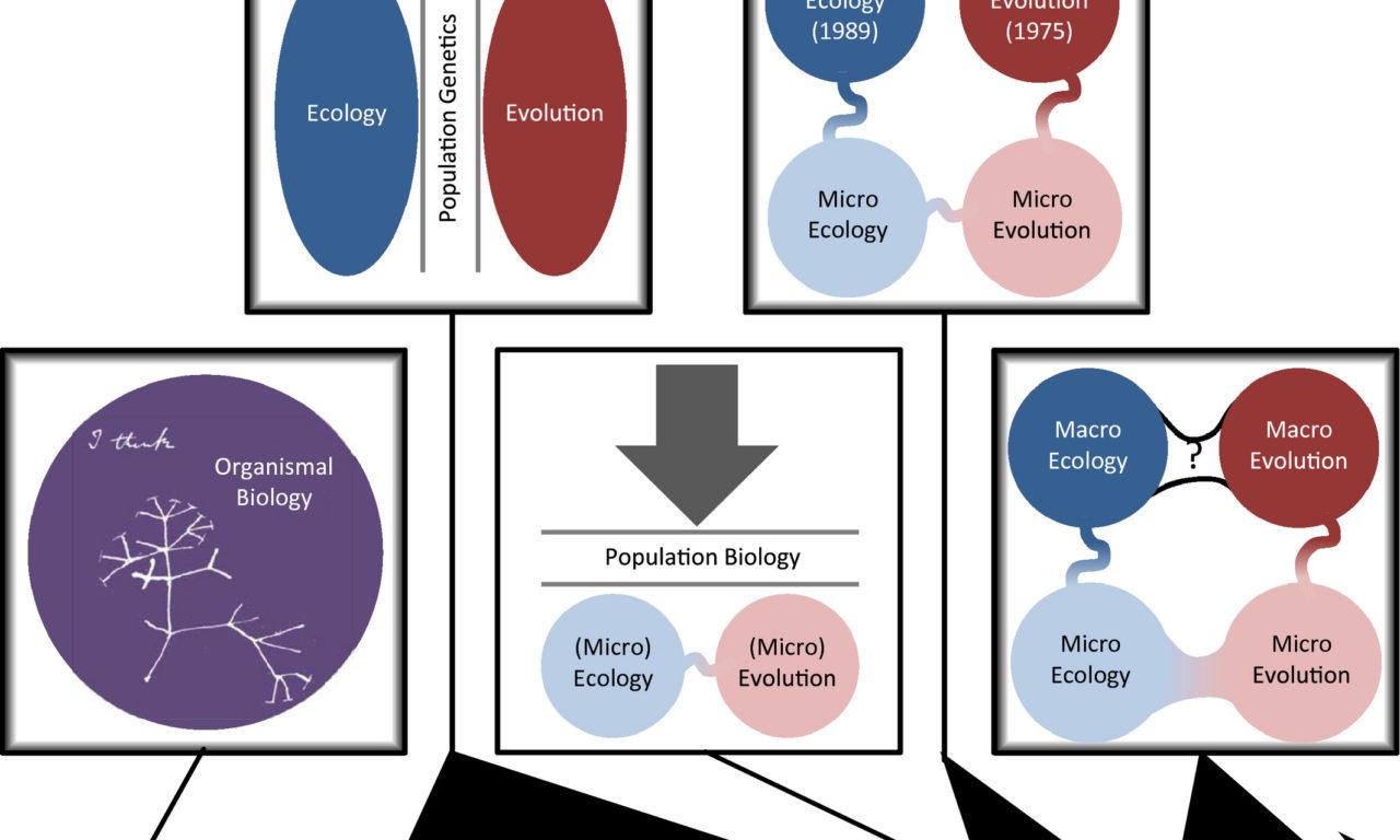 McGill et al (Global Ecol Biogeogr 2019) Unifying macroecology and macroevolution