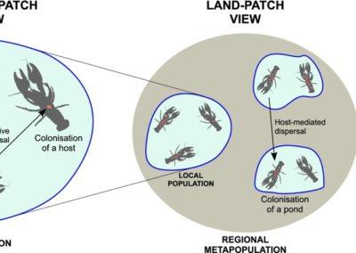 Mestre et al (Biol Rev 2020) A niche perspective on the range expansion of symbionts
