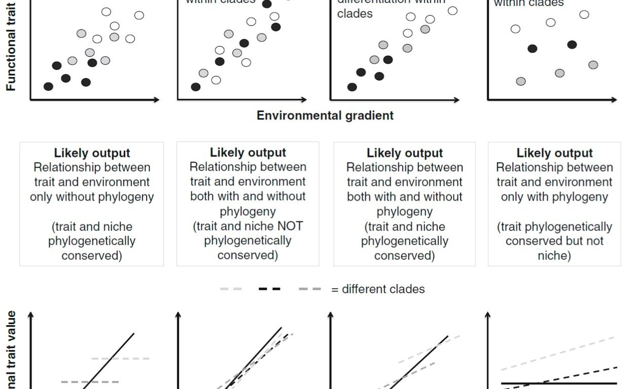 de Bello et al (Folia Geobot 2015) On the need of phylogenetic corrections in functional trait-based approaches